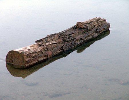 I love log