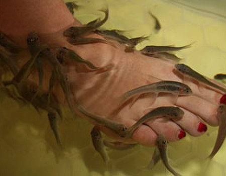 Tried and tested: fish pedicures at Wonda Fish, Camden