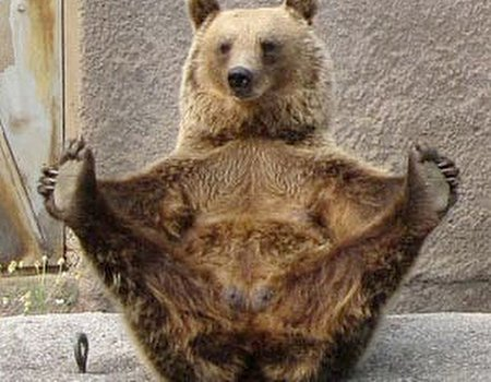 Yoga - the bear necessity of life